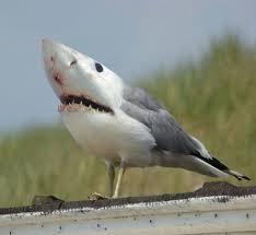 mutáns cápa